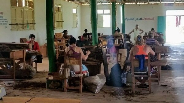 Cuban tobacco sorting factory