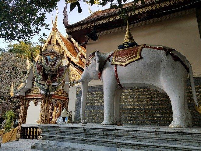 Doi Suthep elephant Chiang Mai