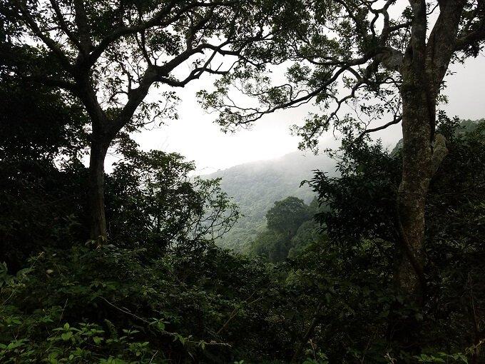 Son Tra Mountain Park