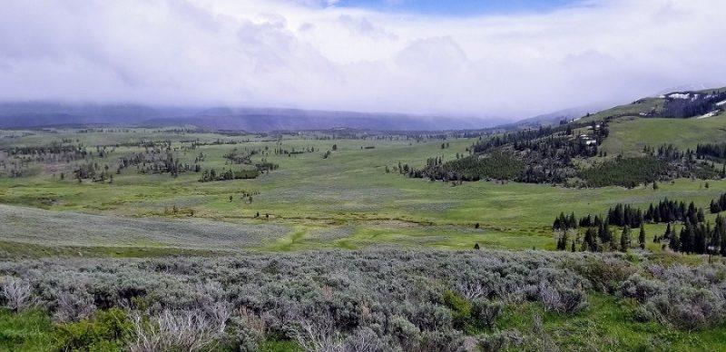 Yellowstone Lamar Valley