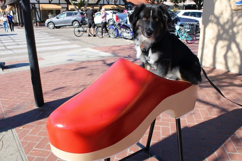 things to do in Solvang dog in clog